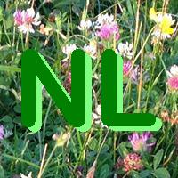 Eigenes Logo für unseren Newsletter (NL)