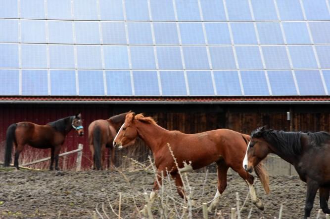 (C) Gerd Peter, 23.03.16. Pferde vor einer Photovoltaikanlage in Hamm