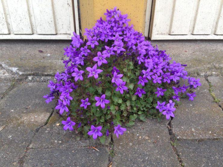 Blume auf dem Garagenhof