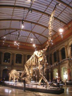 Dinosaurier-Skelett im Naturkundemuseum