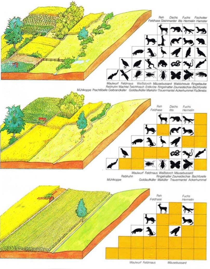 Darstellung der Veränderung Artenschutz durch Land- und Forstwirtschaft