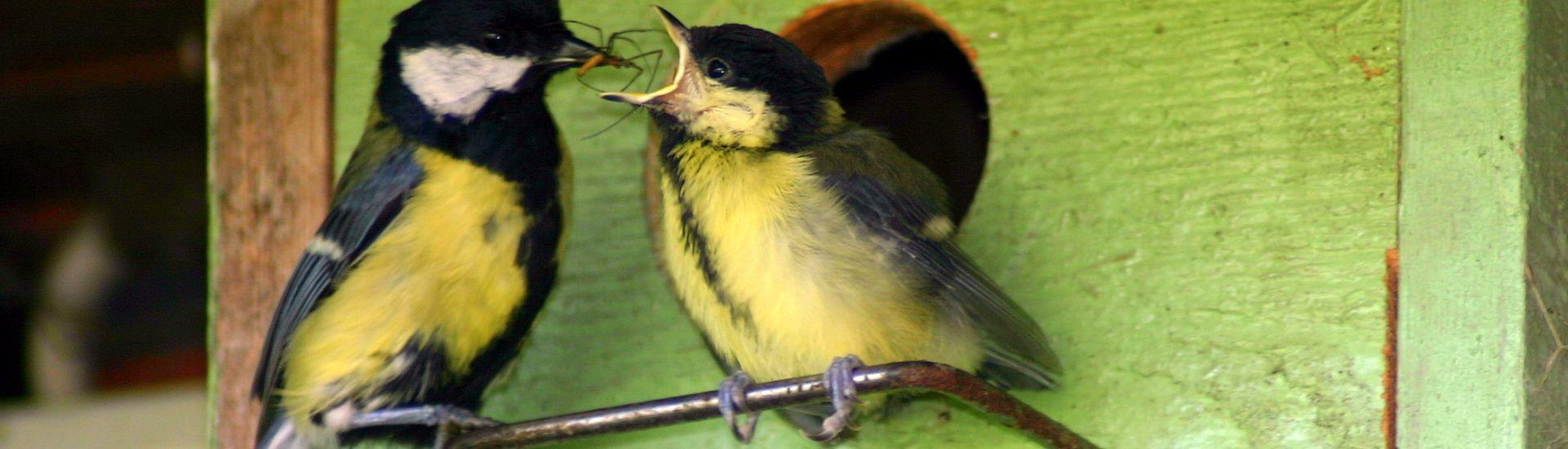Artenvielfalt: Meisen mit Spinne vor dem Nistkasten