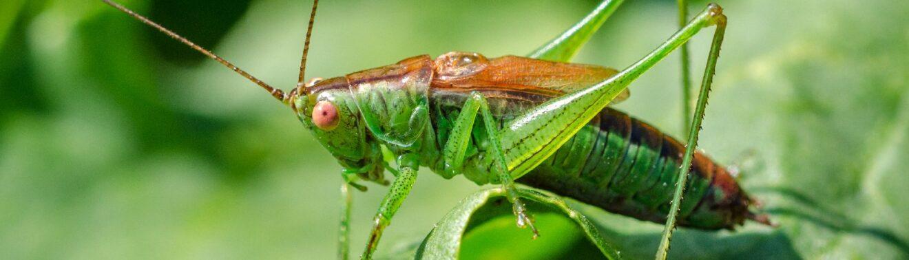 Volksinitiative Artenvielfalt